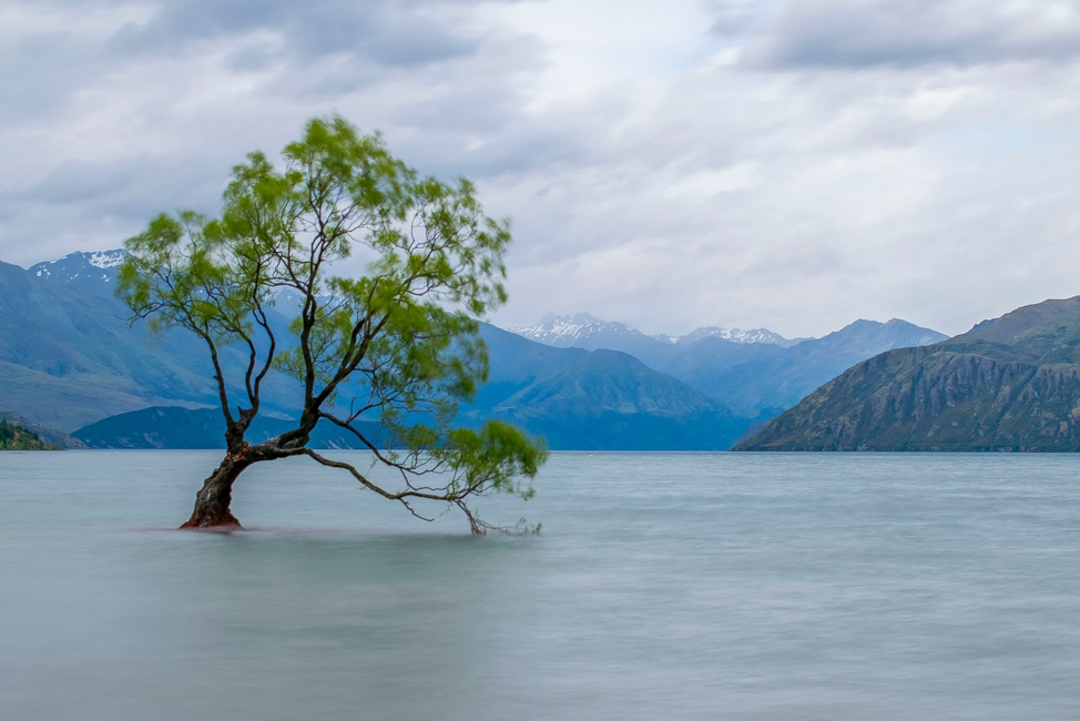 Tree in a lake image