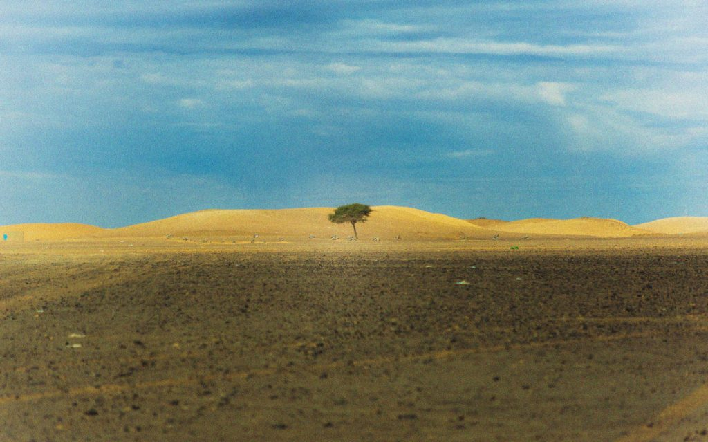 Landscape image with tree